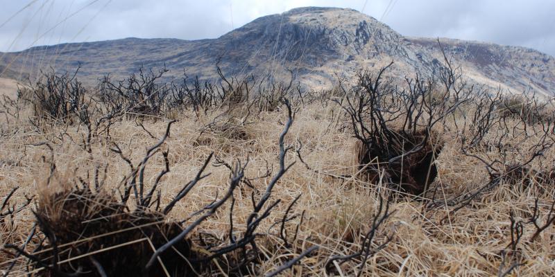 Fire damaged hummocks in degraded blanket bog